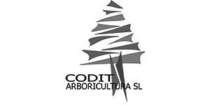 Codit